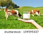 glass of milk against herd of... | Shutterstock . vector #159595337