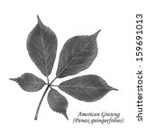 Small photo of American Ginseng leaves along with its common and Latin name isolated on a white background.