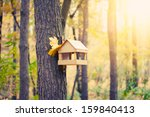 Starling House On Tree In...