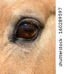 Vertical Horse Eye Close Up...
