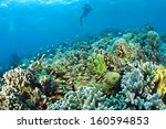 underwater staghorn table coral ... | Shutterstock . vector #160594853