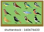 12 European Common Birds...