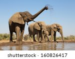 A Herd Of African Elephants...