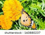 butterfly on flower in public...   Shutterstock . vector #160880237