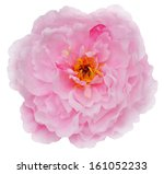 close up of colorful petal... | Shutterstock . vector #161052233