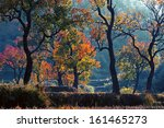 colorful autumn  | Shutterstock . vector #161465273