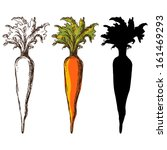 set sketch carrots isolated  ... | Shutterstock .eps vector #161469293