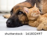 Close Up  Cat And Dog Together...
