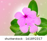 periwinkle flowers isolated on... | Shutterstock . vector #161892317