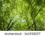 Green Tree Canopy Background.