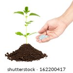 fresh basil plant | Shutterstock . vector #162200417
