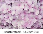 Purple Hydrangea Flowers For...