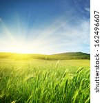 meadow of wheat. nature... | Shutterstock . vector #162496607