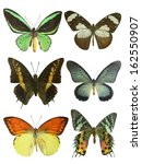 butterfly on white | Shutterstock . vector #162550907