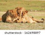 Lioness  Cubs   Cuddling