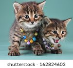 little kittens with small metal ... | Shutterstock . vector #162824603
