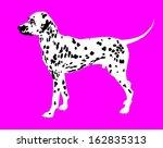 Dog  Dalmatian Breed. Vector O...
