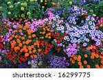 Colorful Flower Bed Background