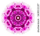 Purple Kaleidoscopic Carnation...