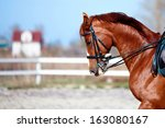 Brown Stallion. Portrait Of A...
