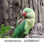 lovely green parrot of hong...   Shutterstock . vector #163088147