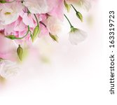 bouquet of pink roses and... | Shutterstock . vector #163319723