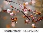 Beautiful Flowering Japanese...