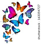 Stock photo many color different butterflies flying 163354727