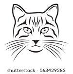 cat on white background   Shutterstock .eps vector #163429283