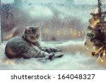 Cat In The Winter Window