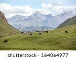 group of farm animals pasturing ...   Shutterstock . vector #164064977