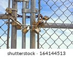 Multiple Padlocks Used On A...