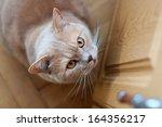 british shorthair tomcat... | Shutterstock . vector #164356217