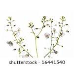lovely small plant against...   Shutterstock . vector #16441540