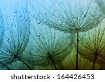 Abstract Macro Photo Of...