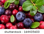 blueberry and cowberry with... | Shutterstock . vector #164435603
