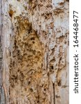 Few insects actually damage dry wood. Termites, both subterranean termites and drywood termites, carpenter ants and certain powderpost beetles are the primary wood destroying insects.