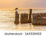 A Bird Sitting On A Post At Th...