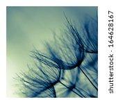 abstract dandelion flower... | Shutterstock . vector #164628167