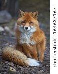 full length portrait of a... | Shutterstock . vector #164637167