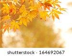 autumn leaves. shallow dept of... | Shutterstock . vector #164692067