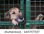 Dog In Animal Shelter