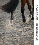 An Abstract Shot Of A Horse...