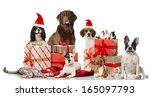 Stock photo christmas pets 165097793