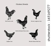 abstract,black,breeds,brown-leghorn,buff-rock,chickens,clip art,cock,cutout,design,easter,hen,icon,isolated,legbar