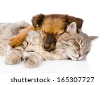 Stock photo cat and dog sleeping together isolated on white background 165307727