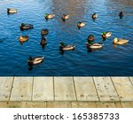 Flock Of Mallard Ducks ...