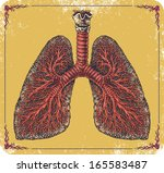 air,allergy,anatomical,anatomy,asthmatic,biology,blood,body,breath,breathe,bronchi,bronchi-ole,bronchial,bronchus,cavity