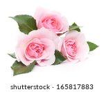 three beautiful pink roses on a ... | Shutterstock . vector #165817883