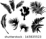 illustration with palm and fern ... | Shutterstock .eps vector #165835523